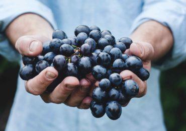 Traubenkernextrakt OPC ist gesund und wirkt antioxidativ