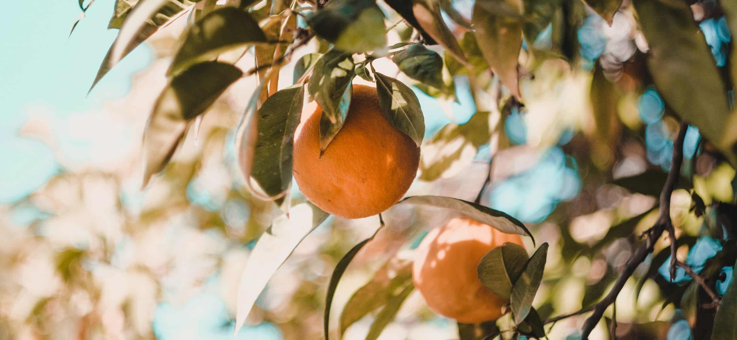 Vitamin C für ein starkes Immunsystem