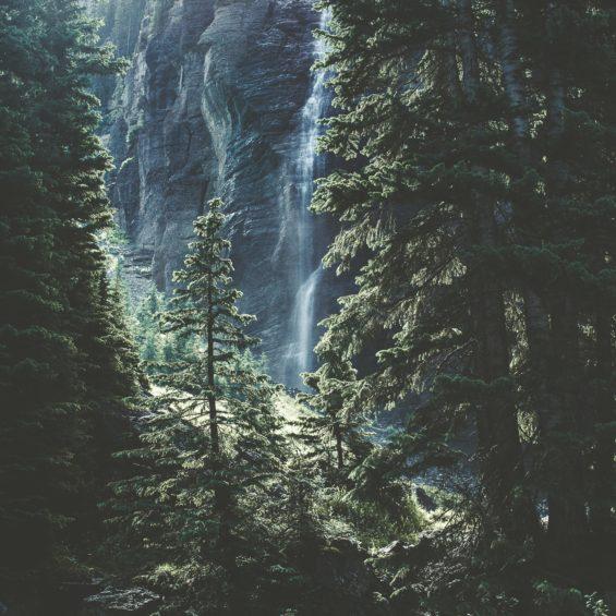 Bäume pflanzen für eine nachhaltige Erde